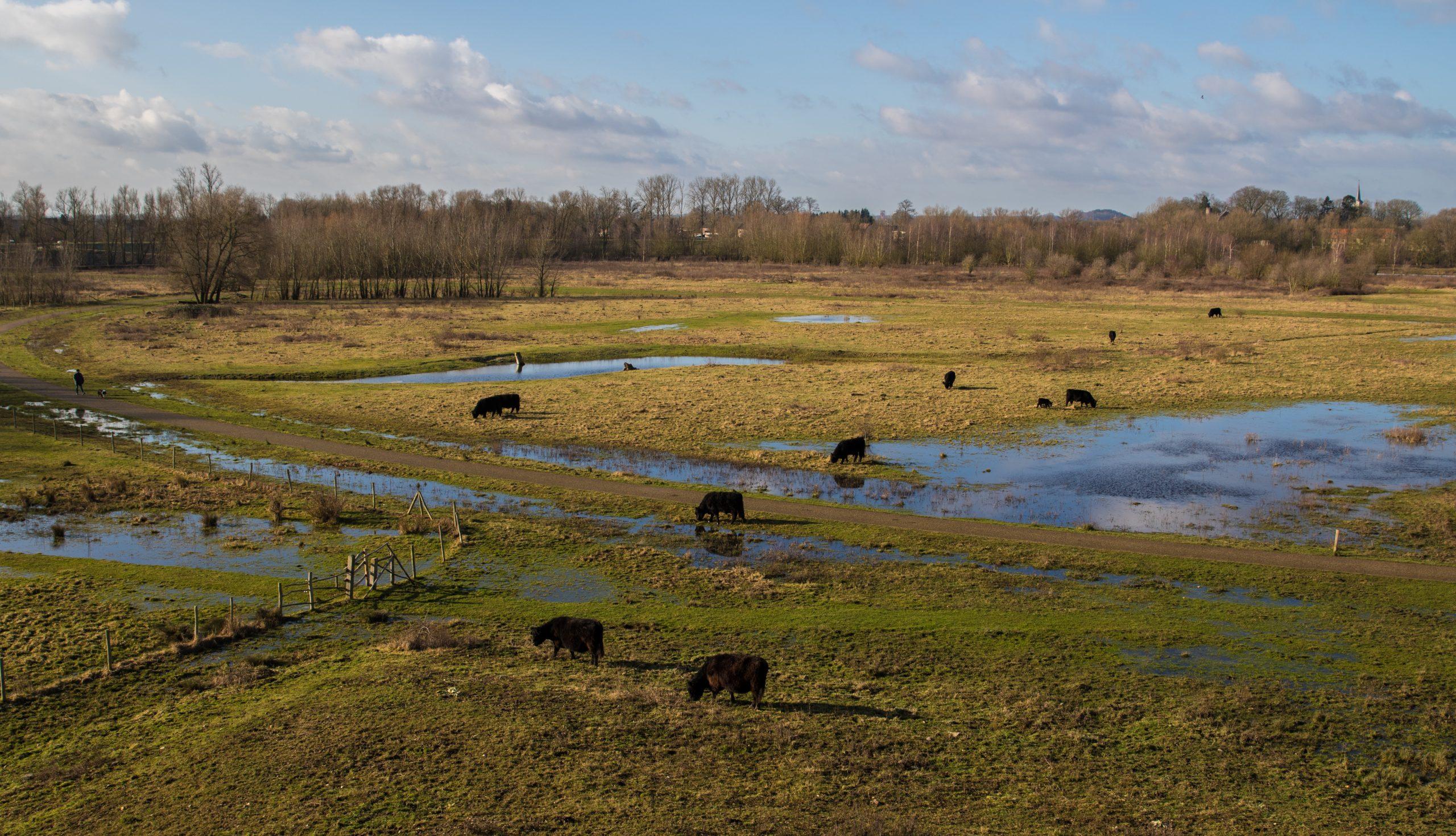 Vacature Directeur Limburgs Landschap vzw (M/V)