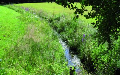 Weer wat meer natuur beschermd in de Itterbeekvallei