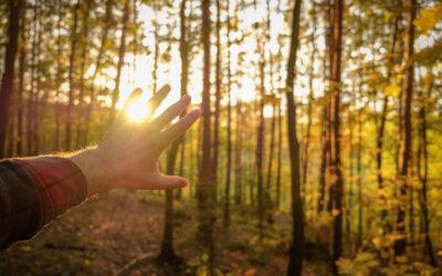 Word bomenplanter voor je 50ste verjaardag!