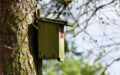 Investeer in vastgoed, bouw een nestkast!